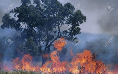 Australia's Fires And Their Effect On The World