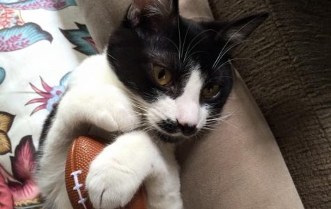 Cats at home are ready for some intense competition! (Photo Courtesy of Adalie Landa)
